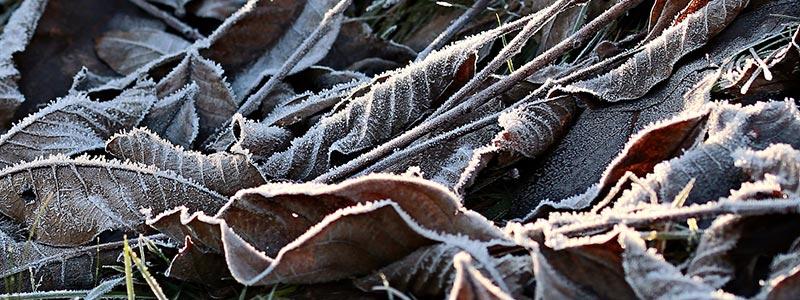 Blätter mit Frost